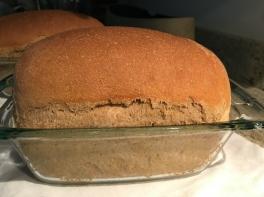 whole wheat sourdough - 1
